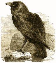 http://www.alchemy-works.com/Resources/crows_cordial.jpg