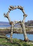 Rowan tree circle in Scotland