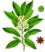 small star anise